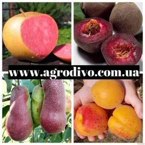 продаж плодових дерев і чагарників оптом і в роздріб