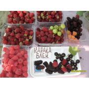 Єкологічні ягоды в г.Суммы (земляника,малина,смородина,годжи).От 1кг,не в
