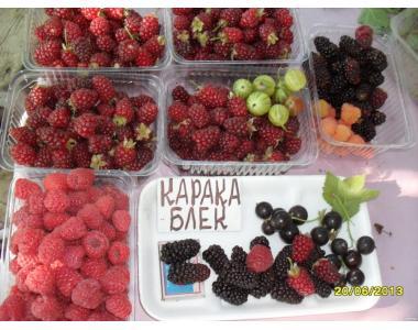 Єкологічні ягоди в м.Суми (суниця,малина,смородина,годжі).Від 1кг,не о