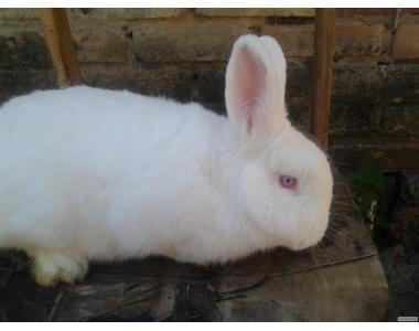 Кролики разных пород.