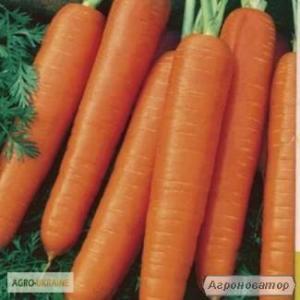 Продам морковь, столовый сорт Карлена ( Германия )