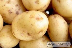 Продам картоплю оптом 21 тонна