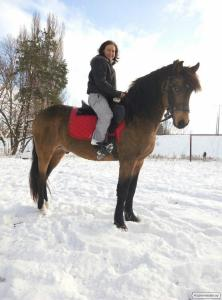 Продам коня, коня, коня помісь