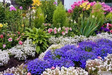 Рассада петунии и других цветов.