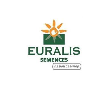 Насіння соняшнику ЄС Новамис (EURALIS semences)