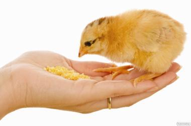 Комбикорм для с/г птицы