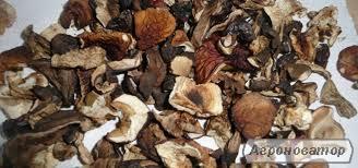 Свіжі гриби Чайний гриб