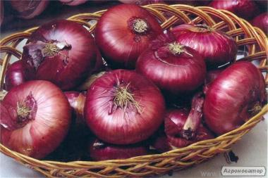 Ялтинський цибулю ріпчаста 1кг насіння Semenaoptom/Семенаоптом