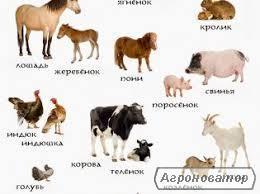 Комбікорм для свиней, птиці, корів,коней, риби. БМВД.