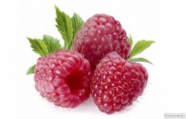 Продам ягоды оптом на экспорт