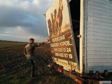 Перевозка лошадей,коров и других животных по Украине.
