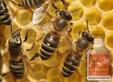 Энтеронормин (пробіотик) для бджіл ТОВ САКС