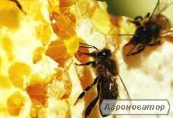 Продам пчелиные отводки