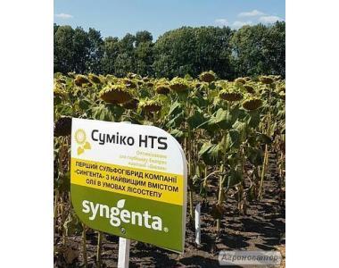 Семена подсолнечника Сумико (Syngenta)