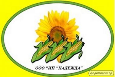 Продам кукурудзу угорської селекції