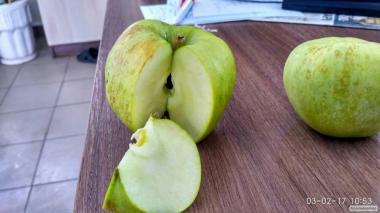 Яблоки оптом на переработку