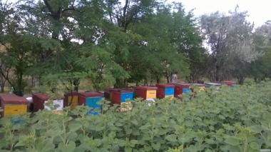 Пчелосеми Бджолопакети Відводки Одеська обл