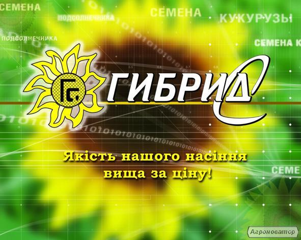 Насіння соняшнику від виробника (Шенон Запорізький 28 Армагедон)