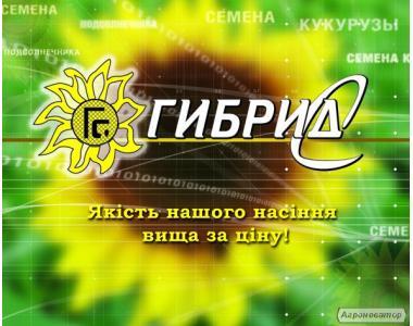 Насіння соняшнику від виробника (Вніс, Славсон, Ясон, Армагедон)