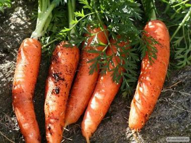 Продам моркву оптом, від виробника.