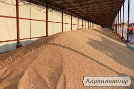 Продам пшеницю у великих обсягах на умовах FOB, CIF
