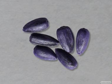 Семена подсолнуха «Меридиан» (Сербский гибрид)