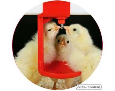 Продам  цыплят бройлеров Росс-308,Росс-708Кобб-500