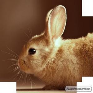 Готові корма для відгодівлі кролів і кролематок 100% Gazda