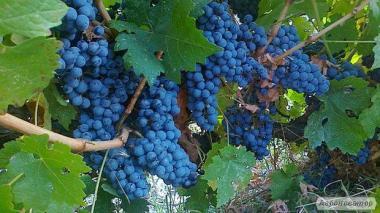 Доставка вина Київ Україна
