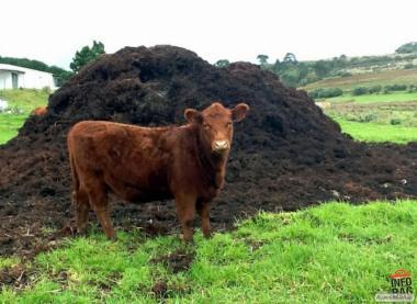 продам гній коров'ячий