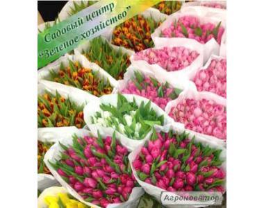 Тюльпаны, цветы к 8 Марта, оптом, Садовый центр, Украина, Киев