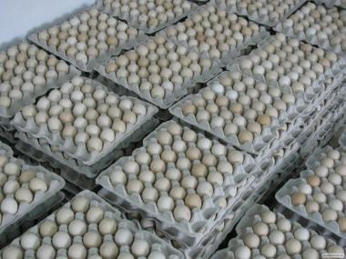 Яйця інкубаційні Росс -308
