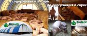 Глубокая несменяемая подстилка для свиней