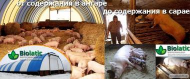 Глибока незмінна підстилка для свиней