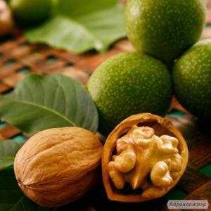 Предлагаю саженцы грецкого ореха из плодов сорта Идеал и Кочерженко.