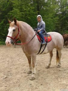 Продам. Гарна доглянута кобила.