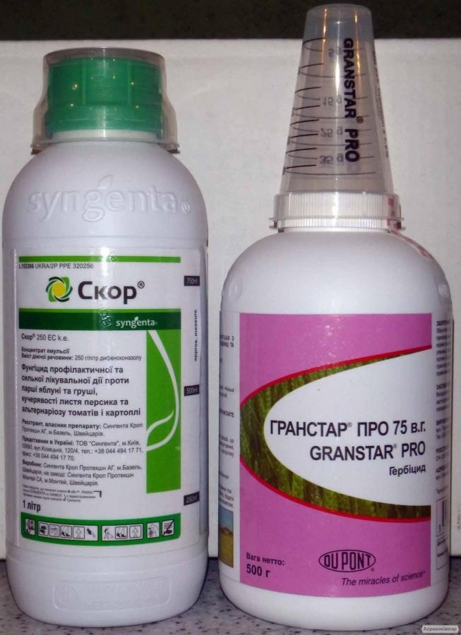 інсектициди скор, энвидор, каліпсо, цезар