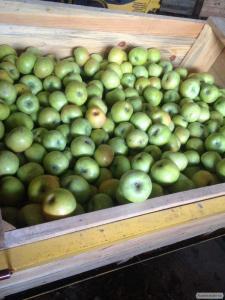 Яблоки оптом, Геническ
