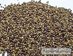 Продам собственные семена люцерны в количестве 3,5 тони в Харьковской
