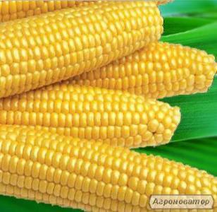 Мегатон F1 насіння кукурудзи суперсолодкої Harris Moran