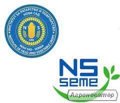 Насіння кукурудзи: НС - 3033 (Нові Сад, Сербія)