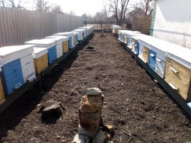 Продам бджолосім'ї, бджолопакети