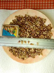 Підприємство реалізує високоякісне насіння часникуДоставка Новая почта