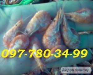 Чорноморська креветка