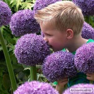Багаторічні квіти і трави