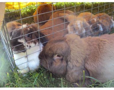 Продаю кроликей не дорого