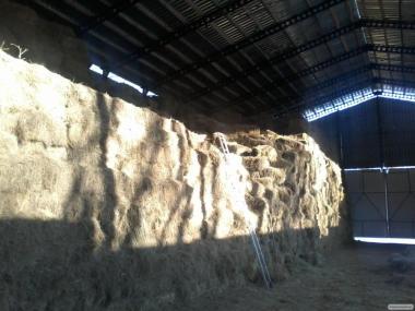 Сіно лугове тюковане 16-18 кг