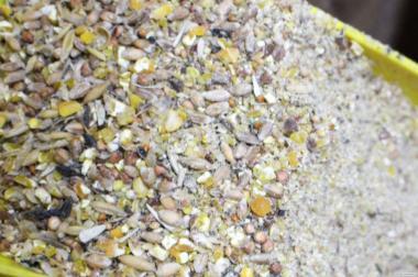 Зернові корми