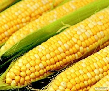 Гібриди кукурудзи: Вихід 181, Кремень 200СВ, Оржиця 237