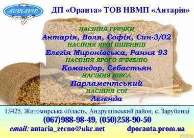 Семена гречихи София, Антария, Воля, Сын-3/02